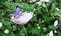 A butterfly on the flower.jpg