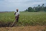 A farmer in Kerala 06.jpg