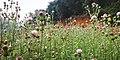 A garden OF SALDANDA.jpg