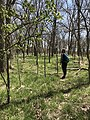 A woman in the forest at Rock Creek Crossing in Council Grove, KS (3cd35d771c8e458087b7c44c2882104a).JPG