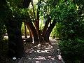 Aaaaarbre al Jardí Botànic de València.JPG