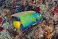 Abrolhos Marine National ParkRobertoCostaPinto33.jpg