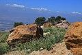 Al Ardha Sub-District, Jordan - panoramio (3).jpg