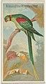Alexandrine Ring Parakeet, from the Birds of the Tropics series (N5) for Allen & Ginter Cigarettes Brands MET DP829142.jpg