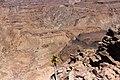 Aloe Dichotoma på Fish river canyon-0495 - Flickr - Ragnhild & Neil Crawford.jpg