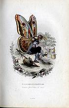 Amédée Varin - Papillons 1.jpg