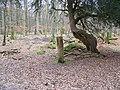 Amberwood Inclosure - geograph.org.uk - 1167264.jpg