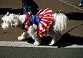 American dog (1701498906).jpg