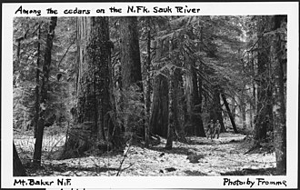Mount Baker National Forest - Image: Among The Cedars on The North Fork Sauk River, Mount Baker National Forest, 1936. NARA 299081