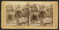 An elevated snoozer, (a bear at the Lincoln Park Zoo). Lincoln Park, Chicago, from Robert N. Dennis collection of stereoscopic views.png