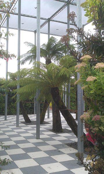 Fougères arborescentes du parc Terra Botanica