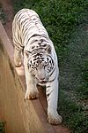 Animais do Zoo passam por exames periódicos (33895081465).jpg