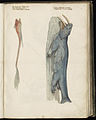 Animal drawings collected by Felix Platter, p1 - (30).jpg