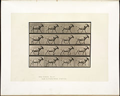 Animal locomotion. Plate 676 (Boston Public Library).jpg