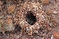 Ant colony underconstruction.jpg