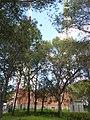 Antenas Sierra de San Cristóbal P1230284.jpg