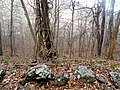 Appalachian Trail North Unicoi Gap - panoramio.jpg