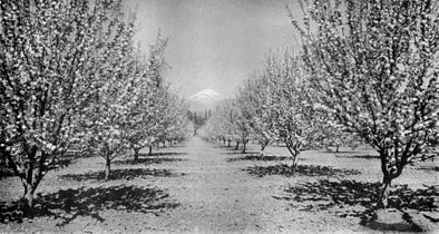 Apple Orchard CNE-v1-p154-G.jpg