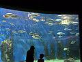 Aquarium-melbourne.jpg