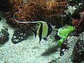 Aquarium Genoa 14.JPG