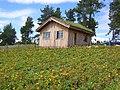 Arnica montana culture écosse.jpg