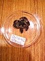 Asteroidea (USNM 1503359) 005.jpeg