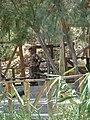 Atar Hatvila - Qaser Al Yahud P1020106.JPG