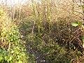 Attenborough Nature Reserve Path - geograph.org.uk - 1126834.jpg