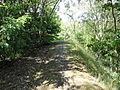 Auby - Terril n° 140, Marais du Vivier Ouest (08).JPG