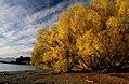 Autumn Lake Tekapo NZ. (15202407460).jpg