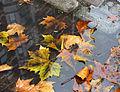 Autumn leaves 01.jpg