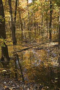 Autumn trees standing in water - Swan Lake National Wildlife Refuge.jpg