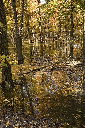 Swan Lake National Wildlife Refuge - Autumn trees standing in water in the refuge
