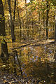 Autumn trees standing in water - Swan Lake National Wildlife Refuge.jpg