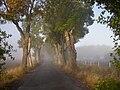 Avenue a misty morning in falltime.jpg