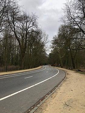 Image illustrative de l'article Avenue de Boitsfort