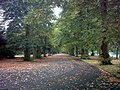 Avenue of trees in Barking Park - geograph.org.uk - 573347.jpg