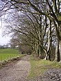 Avenue of trees on Nuthanger Down - geograph.org.uk - 361832.jpg