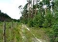 Bělušice, Pšenice Forest.jpg