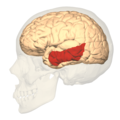 BA21 - lateral view.png