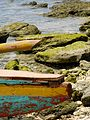 Balicasag Island (2052084295).jpg
