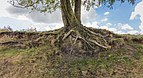 Balloërveld, natuurgebied in Drenthe 26.jpg