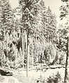 Bark beetle risk in mature ponderosa pine forests in western Montana (1972) (20359536411).jpg