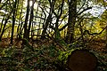 Baum im Grumsiner Wald.jpg