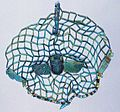 Bead net with scarab HARGM3698.JPG