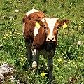 Berchtesgaden IMG 4995.jpg