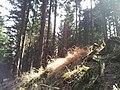 Bielawa, Poland - panoramio (10).jpg