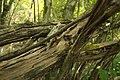 Biotopo inghiaie-natura morta3.jpg
