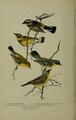 Bird-Lore-6-6 0242.png