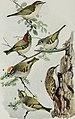 Bird-lore (1915) (14752157101).jpg